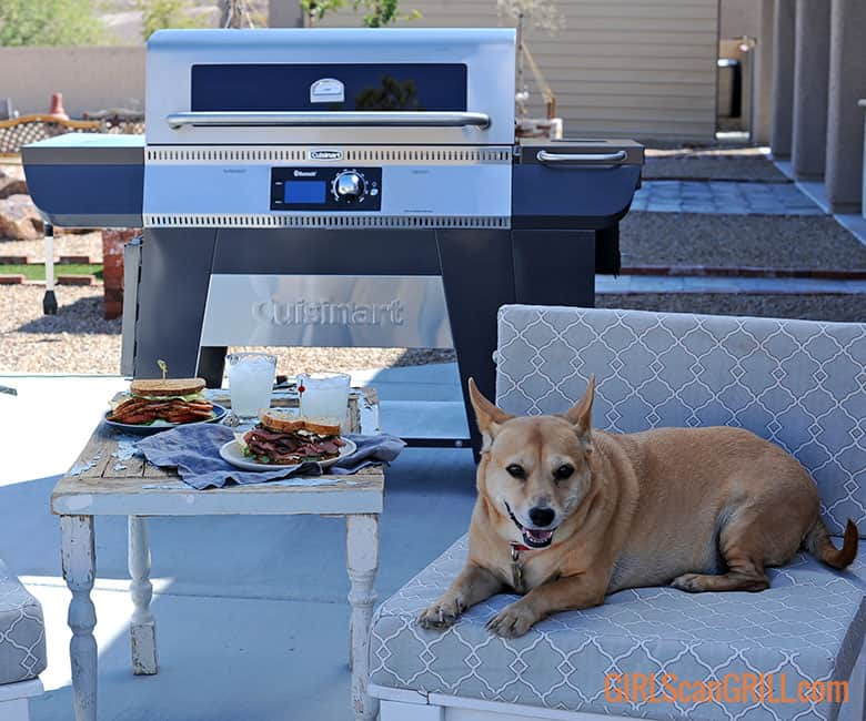 dog on chair by Cuisinart pellet grill with sandwiches